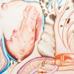 Appareil #1 2010 crayons de couleur sur papier 40 X 40 cm