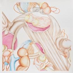 Appareil, grand #2, 2011, crayons de couleur et pastel sur papier 102 X 102 cm